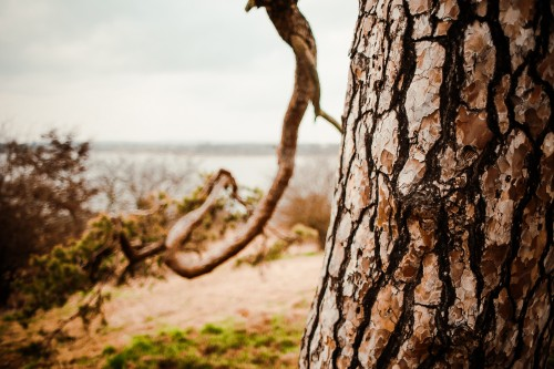 a-conifer-tree-trunk-close-upbad3433e23497a63.jpg