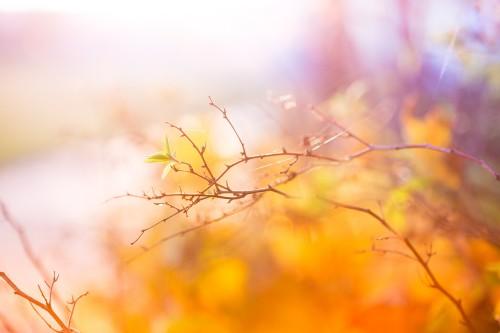 abstract-colors-of-autumn_free_stock_photos_picjumbo_HNCK9636314b62218400612f.jpg
