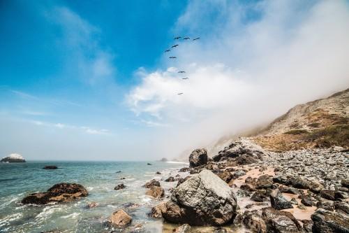 9-birds-flying-along-the-ocean-shoreline_free_stock_photos_picjumbo_hnck4241e85495b307fa2db9.jpg