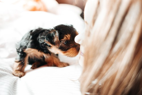 adorable-puppy-licking-young-womaned6805839a31ae5b.jpg