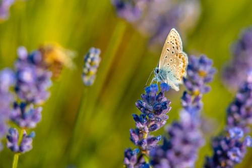 blue-butterflyac615635e0ed0987.jpg