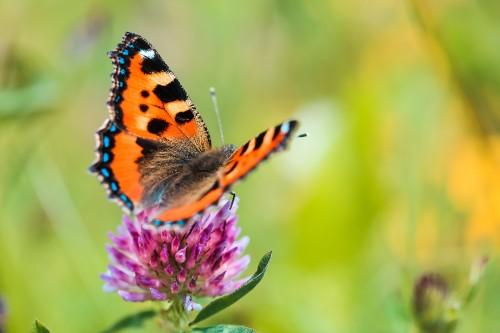butterfly-close-upb113d6483f8a8146.jpg