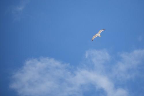 flying-seagull-free-as-a-bird_free_stock_photos_picjumbo_HNCK81663888d08a68dc21d5.jpg