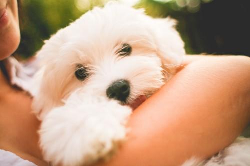 hugging-maltese-dog-puppy_free_stock_photos_picjumbo_IMG_988198e3c5f21251ab47.jpg