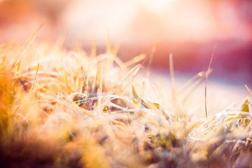 dreamy-morning-hoarfrost-on-grass_free_stock_photos_picjumbo_hnck9715af5746c576d7589f.jpg