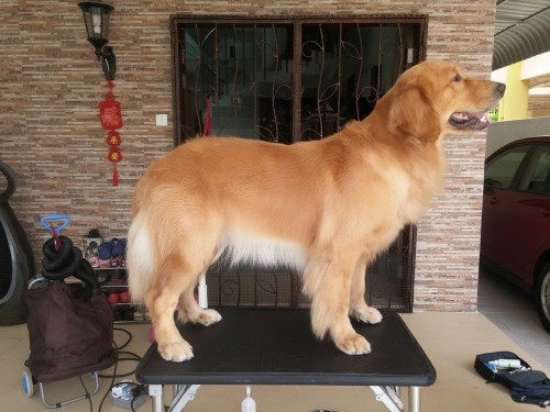 Groomers-for-Dogs---Awesome-Pawsomefa5d512987dd2d14.jpg